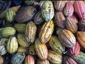 Comprar El Cacao