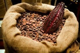 Comprar Cacao en granos