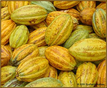 Comprar Cacao Orgánico