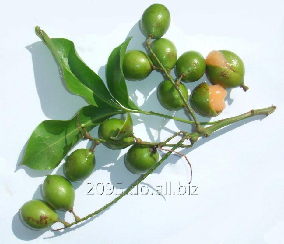 Spanish lime / Kenepa / mamoncillo /