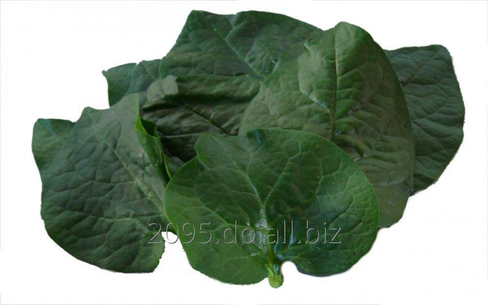 Comprar Spinach/ Espinaca