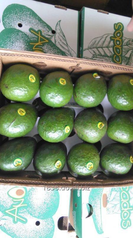 Comprar Aguacate dominicano exportacion