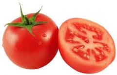Tomate del Caribe for Export to USA, CANADA,