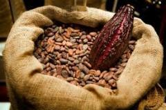 Cacao en granos