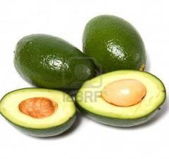 Aguacate /Avocado