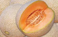 Melón Cantaluope