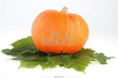 Gem Squash Pumpkins