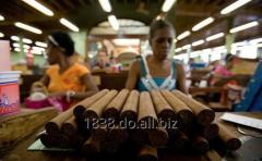 Cuban Cigar Holguin
