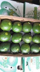 Aguacate dominicano exportacion