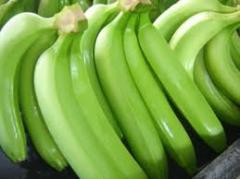 Cultivo orgánico de banano