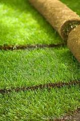 Rolos de grama