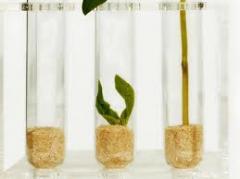 Insecticidas, acaricidas, herbicidas, fungicidas,