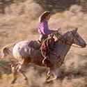 Pedido Equitación