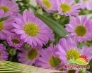 Pedido Produccion de flores
