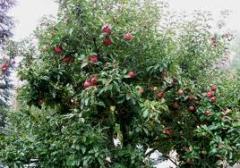 Instalación y mantenimiento de viveros de árboles